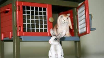 Le clapier à lapin : comment bien choisir un enclos pour son lapin ?