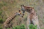 Choisissez l'Afrique du Sud pour des voyages inoubliables !